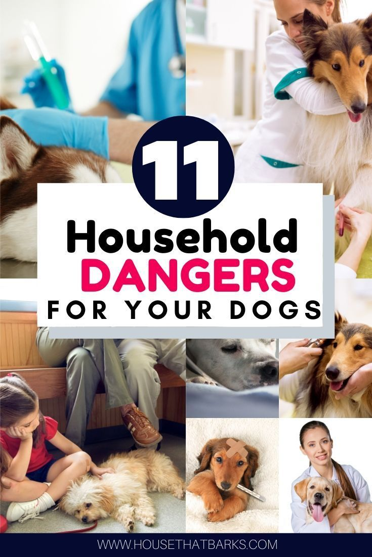11 Commonly Used Household Hazards For Dogs Dogs Sick Dog Dog