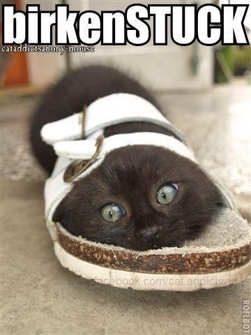 Twitter / snglegrlprblms: Ok. Here you go guys! #caturday ...