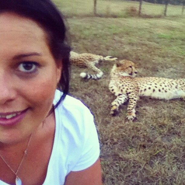 The #cheetah encounter at #Emdoneni Lodge lets you get up close and personal with these wild cats #karryontravel