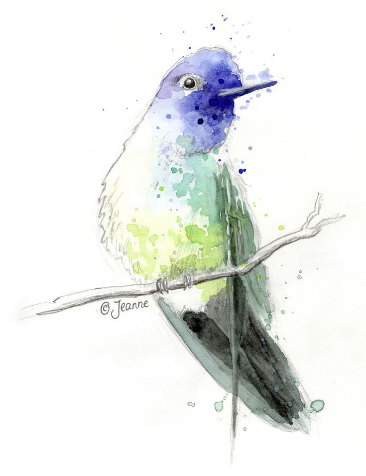 300 Hummingbirds And So Many Different Ways To Illustrate Them | Bored Panda
