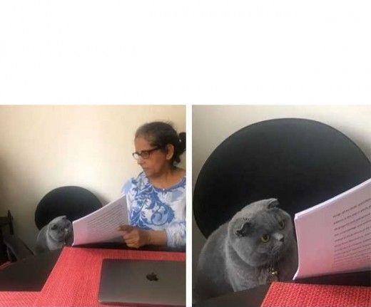 Plantilla Gato Y Por Que Pusiste Meme Generador De Memes