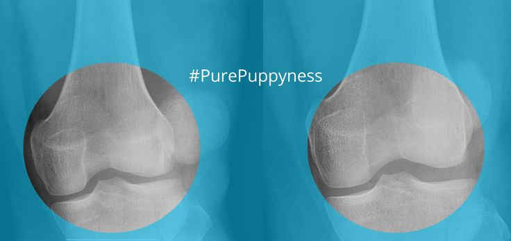 "Patellar Luxation Is your dog bow-legged? Does he or she seem lame in the hind-legs, ""skipping"" slightly before walking normally again? Your dog may be suffering from a dislocated or floating kneecap. This disorder is more properly known as Patellar Luxation."