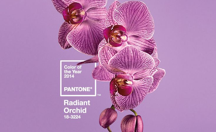 2014 Pantone color of the year - Radiant Orchid!  #pettydetails #radiantorchid #pantone