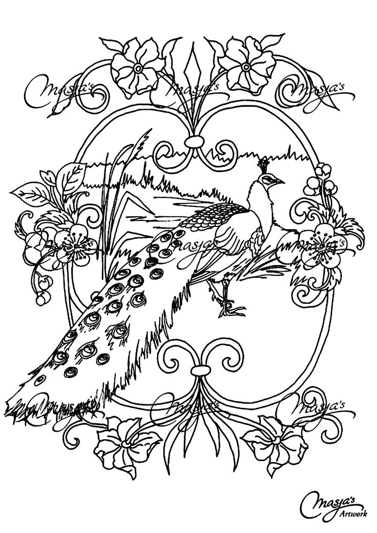 Free Coloring Page Coloring Adult Animals Peacock. Coloring Page Of A  Beautiful Peacock