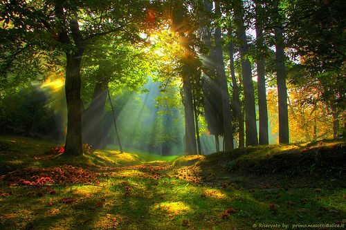 Autumn Sunrise in the forest of childhood dreams, nothing has changed ... in the forest - Missano , Via Fontanazzo.. (zocca modena italy) - 0999 - by masotti primo, via Flickr