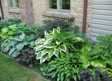 Simple Schattenpflanzen u der Schattenplatz als kleine Oase GartenMagazine de