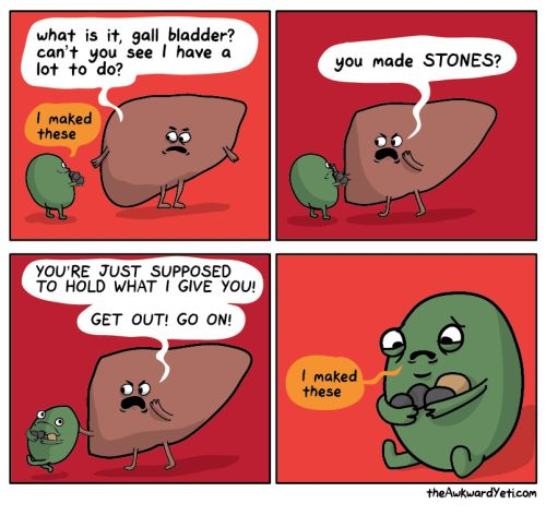 The gallbladder functions to store bile, which is produced by the liver. via The Awkward Yeti