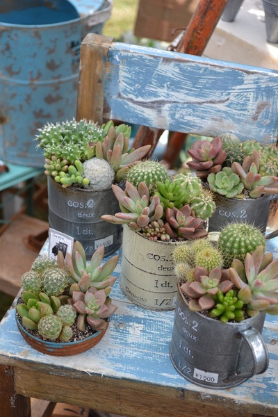 succulents and cacti planters