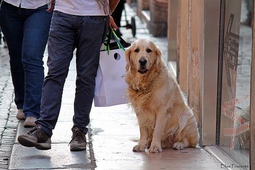 Basta shopping, mi siedo qui!!!