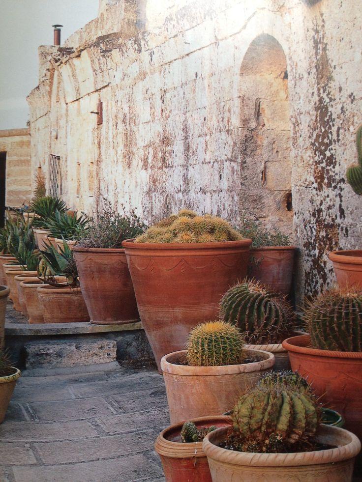 Many many cacti in @wofinteriors