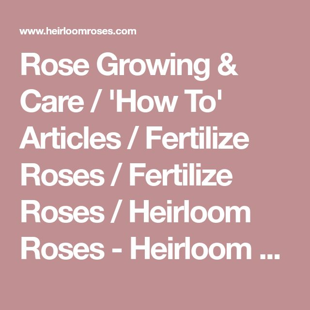 Rose Growing & Care / 'How To' Articles / Fertilize Roses / Fertilize Roses / Heirloom Roses - Heirloom Roses