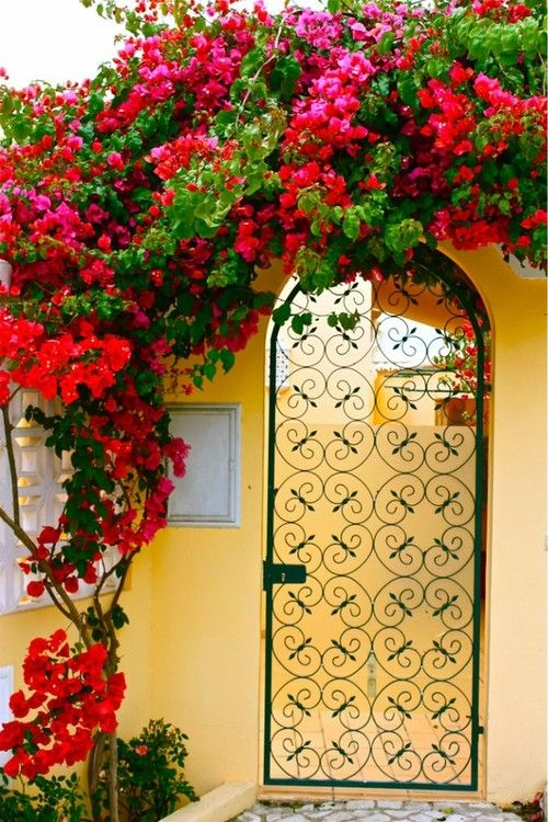 looks like bougainvillea with yellow stucco & black wrought iron - great southern California mission feel
