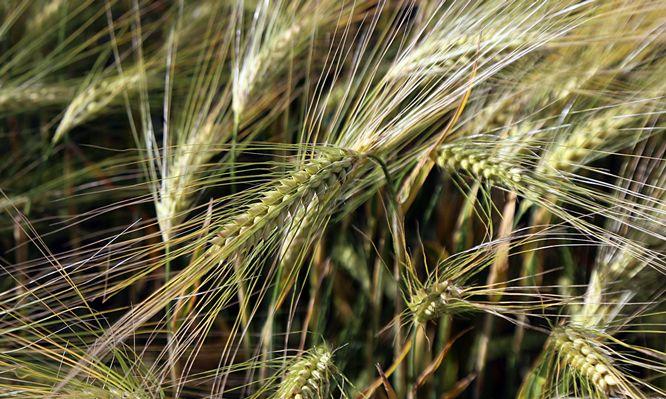 #rolnik #rolnictwo #żniwa #agriculture #pole