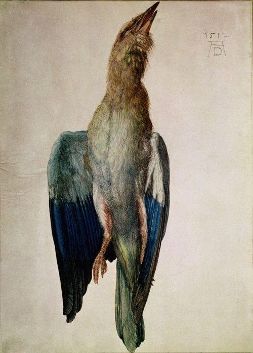 Dürer, Albrecht - Dead Bluebird - Renaissance (Northern) - Animals - Watercolour