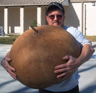 Good advice for anyone wanting to grow gourds. May give it a try with bushel barrel gourds.