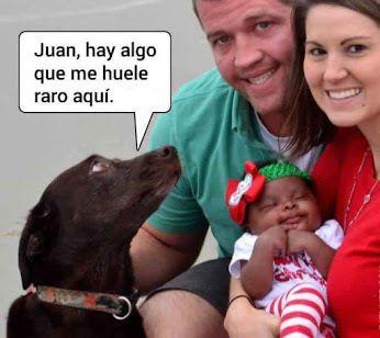 Huele raro ... que será ? Imagenes de risa 2016 Mega Memeces Más en I➨ http://www.megamemeces.com/memeces/imagenes-de-risa-2016