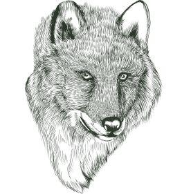 Σύμβολο δύναμης και ελευθερίας ο λύκος στοιχειώνει θρύλους και παραμύθια εδώ και χιλιάδες χρόνια. Η αλήθεια όμως είναι ότι ο «κακός λύκος» των παραμυθιών δεν είναι παρά ένα τρωτό είδος που χρειάζεται προστασία. Υπήρξε το θηλαστικό με τη μεγαλύτερη γεωγραφική εξάπλωση στον πλανήτη μας καθώς κάλυπτε όλο σχεδόν το βόρειο ημισφαίριο.