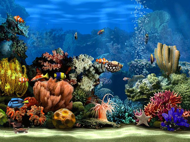 Living Marine Aquarium 2 Screensaver for Windows - Screensavers Planet