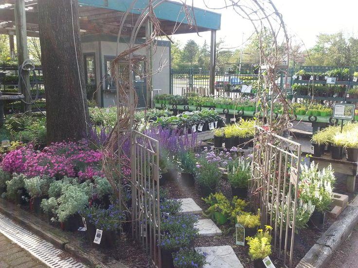 Perennial Display Garden at Hicks Nurseries.