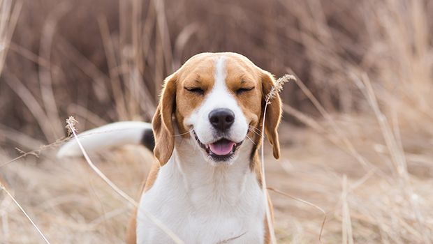 Learn the symptoms of cat and dog allergies and ways to treat problems associated with indoor pet allergies and outdoor pet allergies.