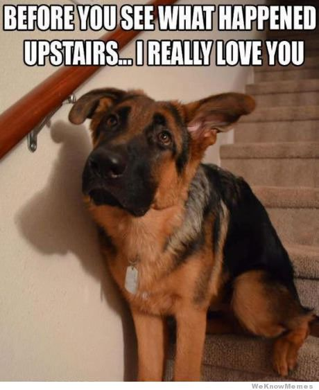 Before You See What Happened Upstairs… aaww