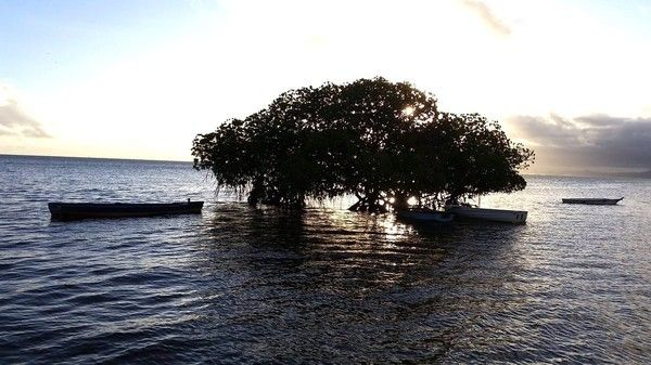 14 Pacific Island Nations Negotiate World's First Climate Treaty to Ban Fossil Fuels. As coastal erosion and sea level rise eats away the Solomon Islands due to climate change, the Pacific island nations are considering the world's first international treaty that would ban or phase out fossil fuels and set goals for renewables.