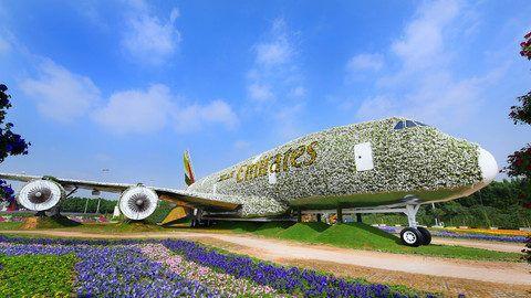 W Dubaju powstała największa na świecie instalacja kwiatowa. Kwiatowego Airbusa stworzyły linie Emirates razem z Dubai Miracle Garden. Samolot składa się z 500 tys. świeżych roślin. Budowa trwała 6 miesięcy i pracowało przy niej ponad 200 osób. Gdy zakwitną, znajdzie się tam nawet 5 mln kwiatów 9 rodzajów: petunie, koleusy, aksamitki, lwie paszcze, fiołki, pelargonie, …