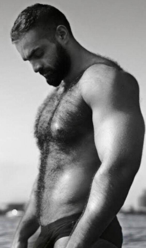 peloso gay Orso porno