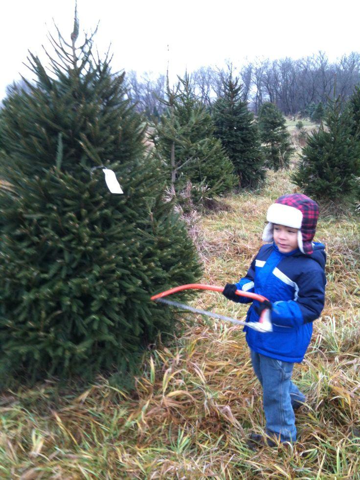 Julian cutting down our Xmas tree