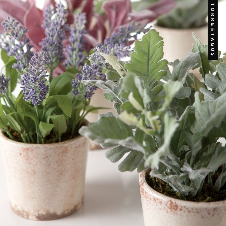 Bring the French countryside indoors with these faux Provence potted plants in vintage ceramic pots - A beautiful home decor accent for any room! #TorreAndTagus #PottedPlants #MayFlowers #HomeDecor www.torretagus.com