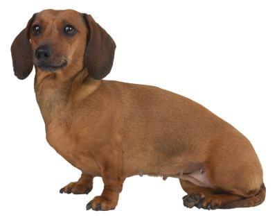 Quais cães possuem a íris dourada? | eHow Brasil                                                                                                                                                                                 Mais
