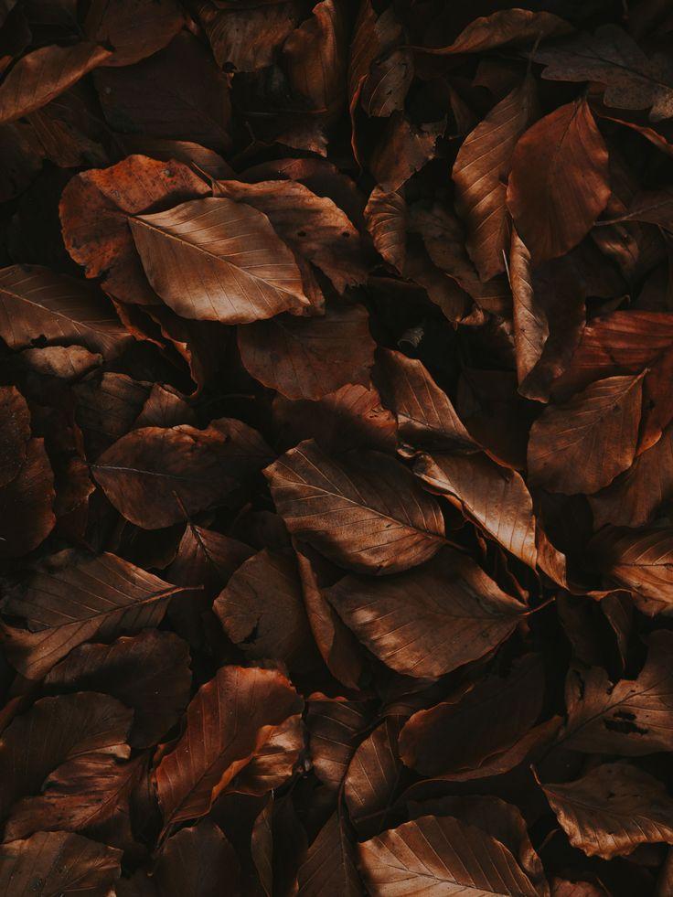 iphone wallpaper inspiration autumn aesthetic winter
