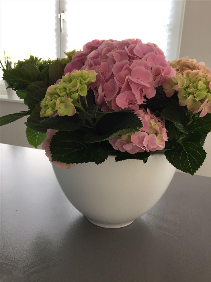 Bloembak met roze hortensia