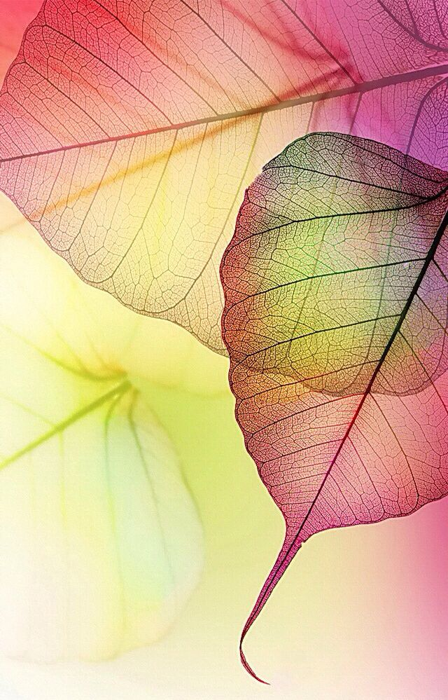 17 Best Ideas About Watercolor Leaves On Pinterest Leaf