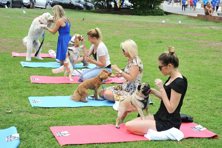 To maximise exposure around the launch of the Hill's Pet Nutrition Australia Ideal Balance pet food range, we took over the iconic North Bondi Surf Life Saving Club and created a bespoke celebrity pet wellness retreat, hosted by Channel 7's Kylie Gillies and celebrity vet, Dr Katrina Warren.
