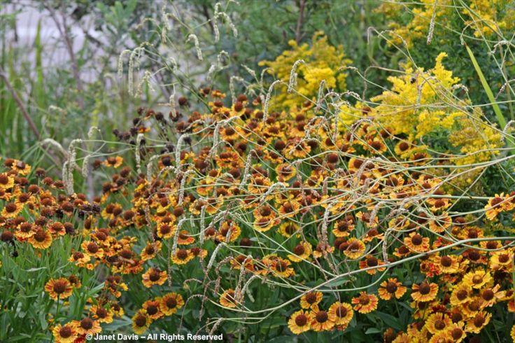 402 besten gardens of piet oudolf bilder auf pinterest for Piet oudolf pflanzen