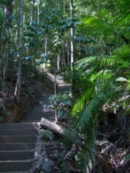 The Red Arrow circuit walk in Mount Whitfield Conservation Park. Photo: Stella Martin, NPRSR.
