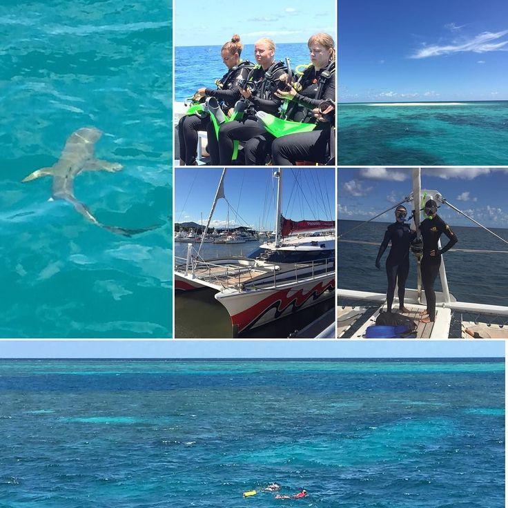 Stora Barriärrevet i dagarna två  Dykt med en 15m #whitetipreefshark   snorklat med en #sköldpadda  sett miljoner av fiskar och rev i regnbågens alla färger  #greatbarrierreef #shark  #turtle  #islanddivers #passionofparadise #äventyr #australien #cairns #livet by saraesandberg http://ift.tt/1UokkV2