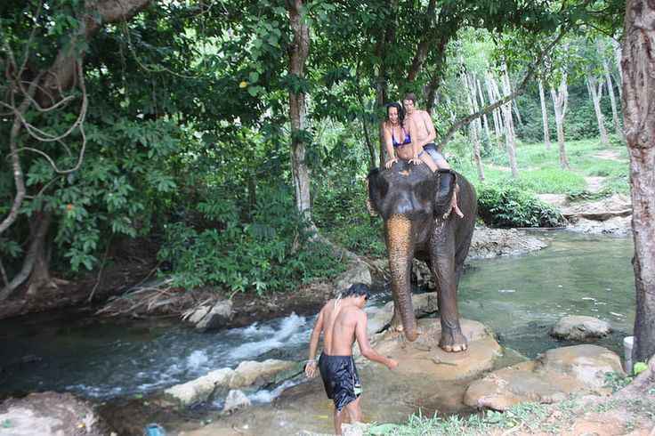 Sexy Woman riding bareback barefoot in bikini on an Elephant in the Jungle/Sexy Frau reitet sattelos barfuß im bikini auf einem Elefant im Dschungel . Ride/Swim with an Elephant