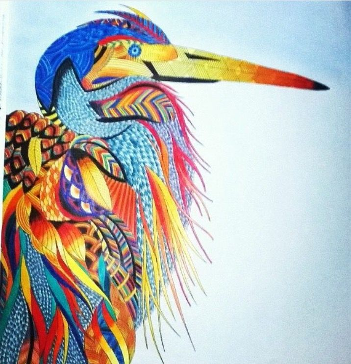 391 Best Color Book Animal Kingdom Millie Marotta Images On