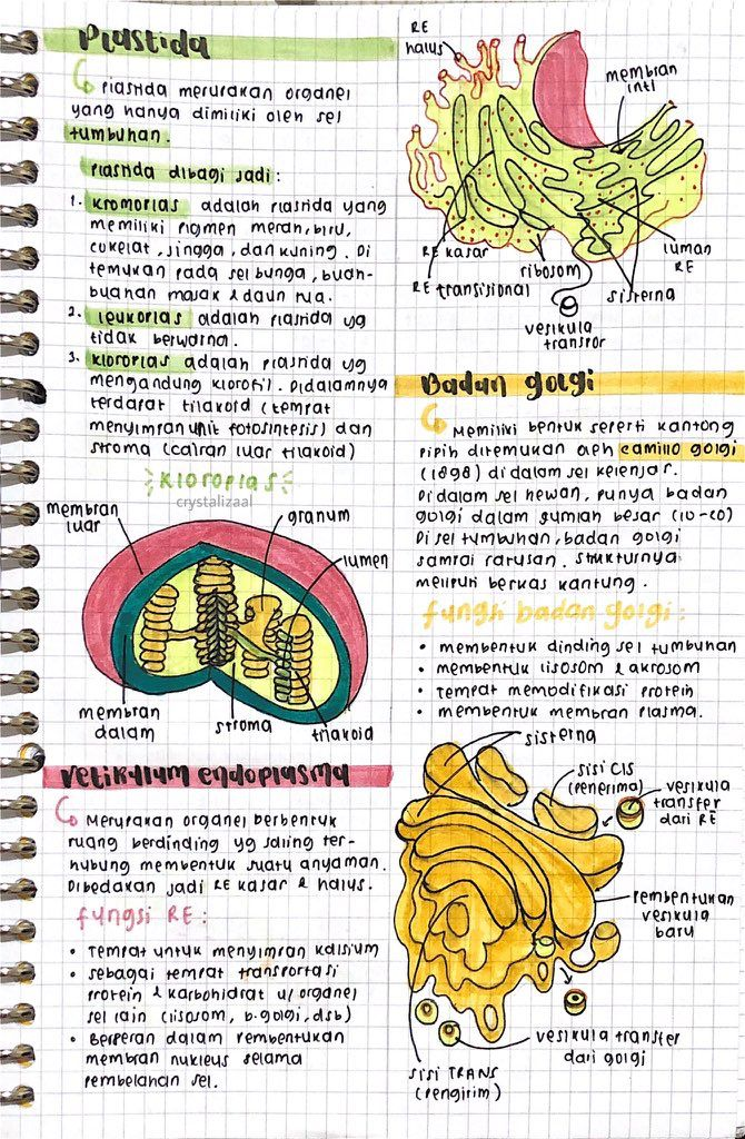 Mind Map Ipa : ☁️Heidy, San☁️, Biologi, Struktur, Teks,, Pelajaran