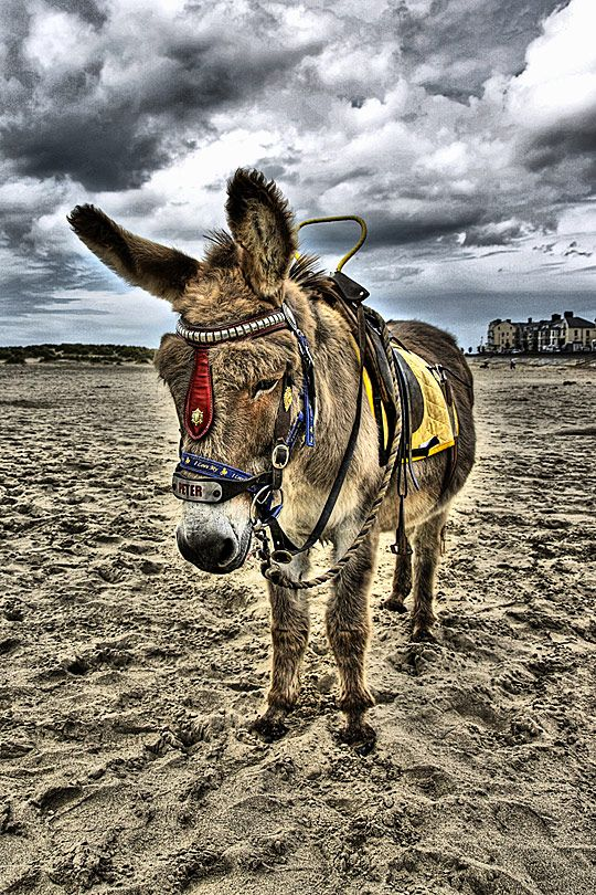 Google képkeresési találat: http://www.cruzine.com/wp-content/uploads/2010/09/047-HDR-animals.jpg