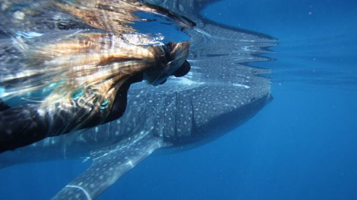 Whale Shark Swim and Snorkel Tour with Lunch and Video