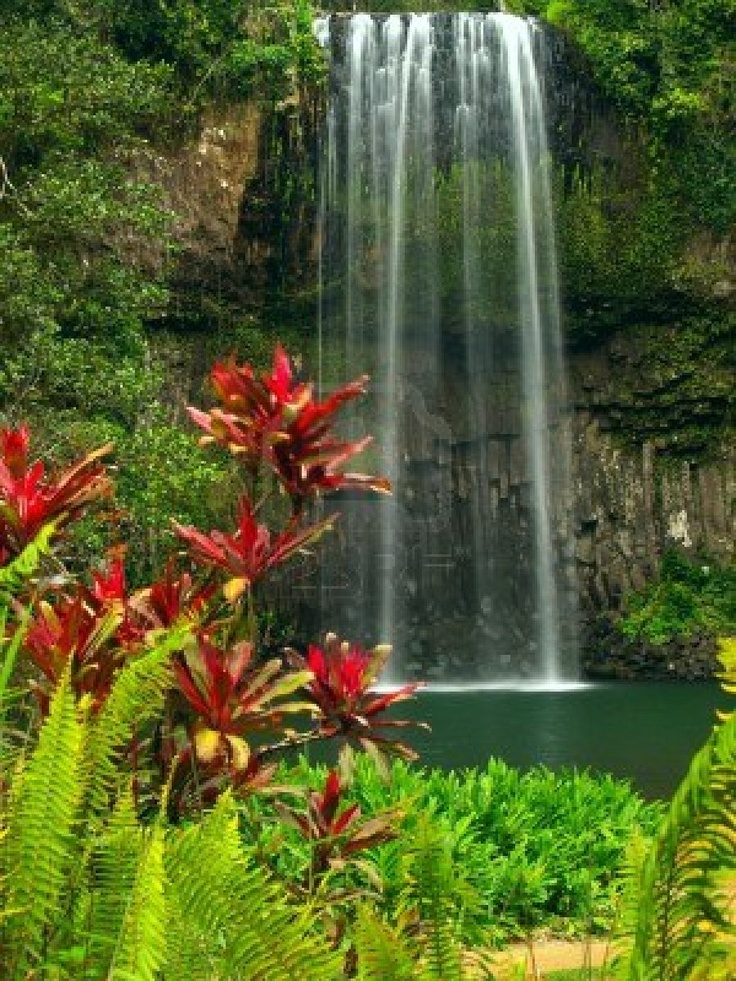 Millaa Millaa falls, QLD