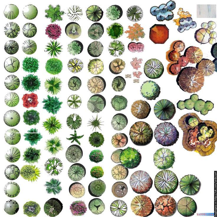Artlantis-library: [Photoshop] Trees PSD on transparent layers.