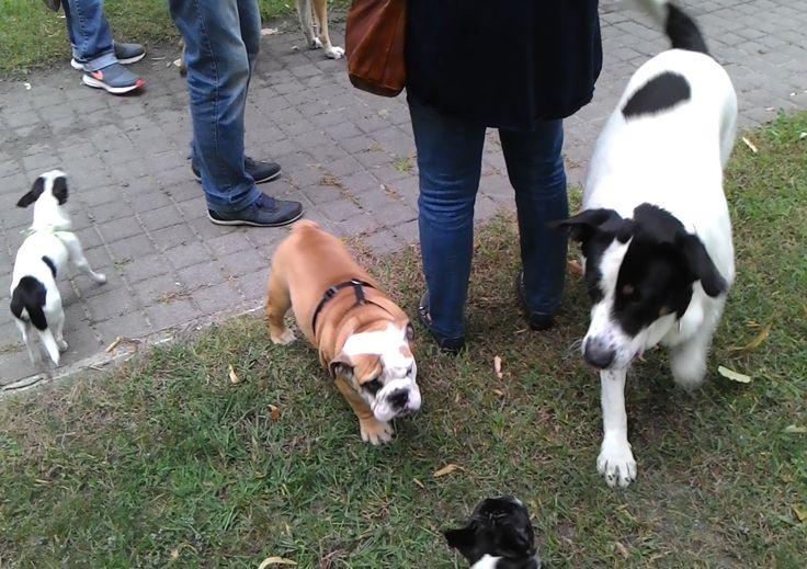 12/09/2015 - Torino con Pepito, Aron e Zagor