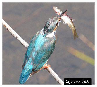 PENで野鳥を撮る|OLYMPUS PEN 超望遠レンズ使用レポート|鳥の写真投稿|FotoPus|オリンパス