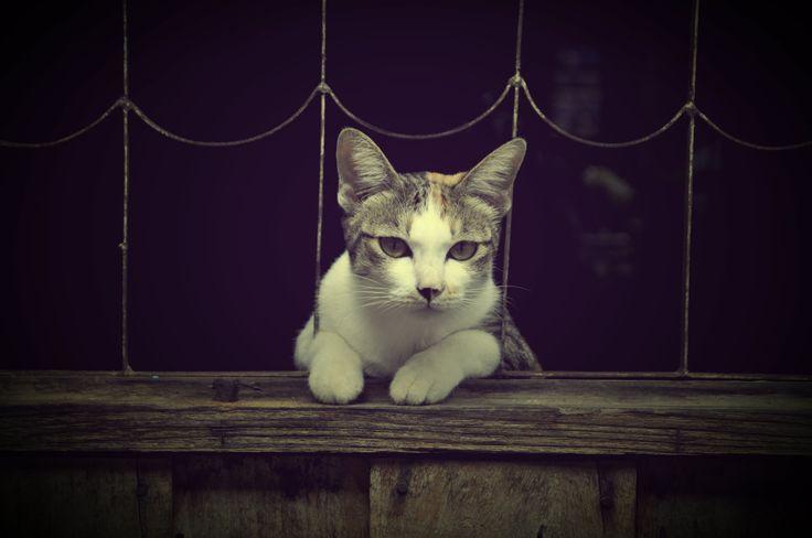 cat ^ ^