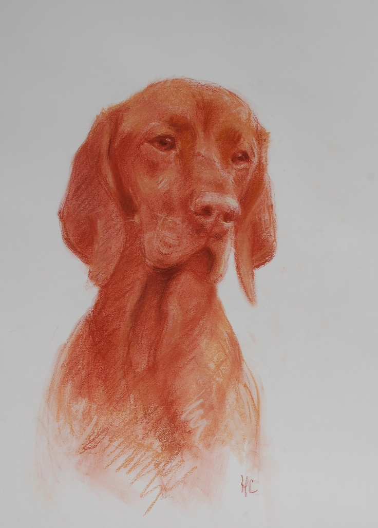Just finished this commission of a Vizla.Dogs Portraits