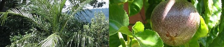 There's a discussion about growing cassia twig on the site and someone is growing it in San Francisco.